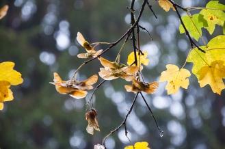 Herbst_2015_10_17_808_1200x800