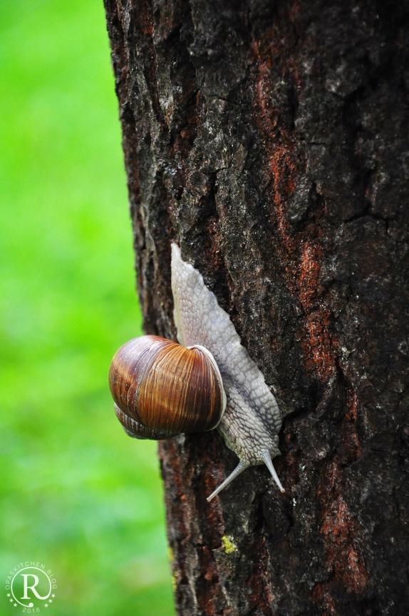 Schnecke an Baum, Fichtelgebirge