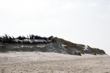 Durch den Strandhafer wachsen die Dünen
