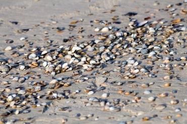 Die Muscheln sind hier ziemlich klein, aber eien bunte Mischung.