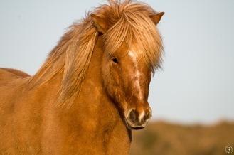 Hübsches Pferdchen