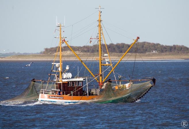Krabbenkutter on the Sea