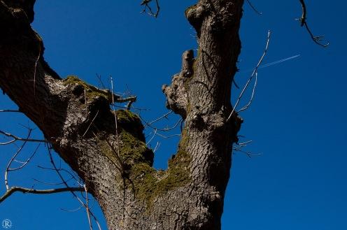Die Bäume haben es hier echt schwer, obwohl Spiekeroog tatsächlich einen Wald hat