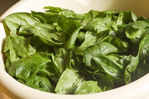Spinat im Frühling, mehrfach waschen, verarbeiten und genießen